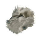 lambswool_icon.png